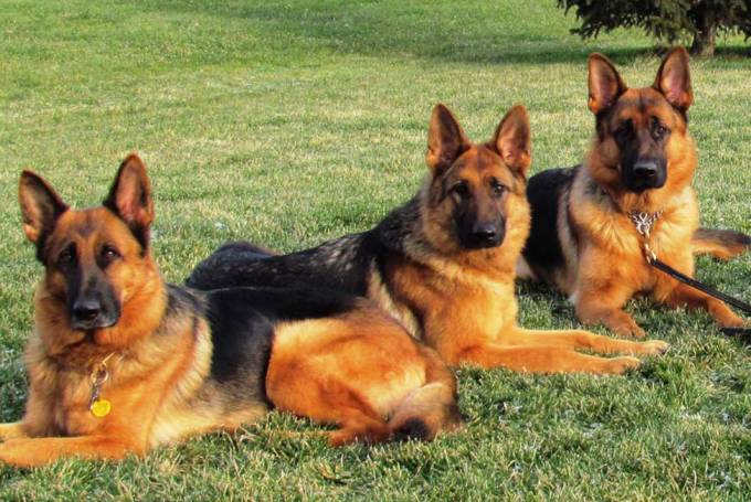 Gebouw-, materiaal- en terreinbewaking met hond